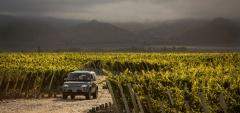 The Vines Resort & Spa - The vineyard