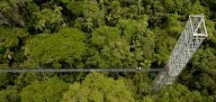 Sacha Lodge - Canopy Bridge