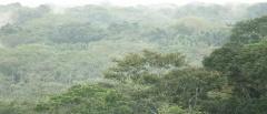 Ecuador's Amazon rainforest