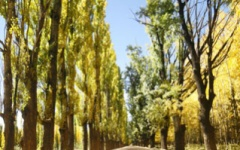 What to do in Mendoza